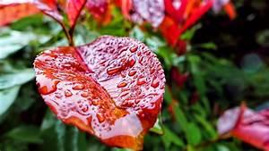 Wallpaper Leaves, 5k, 4k wallpaper, drops, rain, autumn