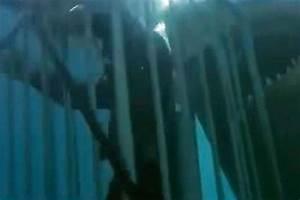Real life Great White shark horror of diver who filmed ...