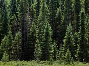 Life In The Taiga : botanist says plant life of boreal forests trinity and josh 39 s travels ~ Frokenaadalensverden.com Haus und Dekorationen
