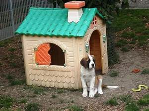 Dog house foto di musee et chiens fondation st for Saint bernard dog house