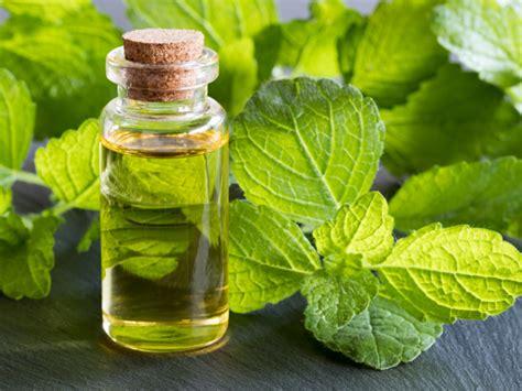 amazing benefits  melissa essential oil organic facts