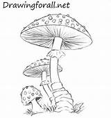Mushroom Mushrooms Drawing Draw Drawings Pencil Fungi Drawingforall Coloring Line Colored Tutorial Step Pencile Tutorials Lines Almost Wild Tegning Neo sketch template