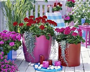 Jardiniere Fleurie Plein Soleil : 7 jardini res pleines de couleurs d tente jardin ~ Melissatoandfro.com Idées de Décoration