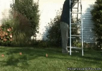 giant ladder fail gifs tenor