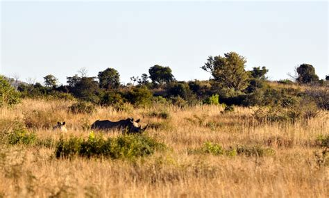Rhino | Photo safari in Pilanesberg National Park, South ...