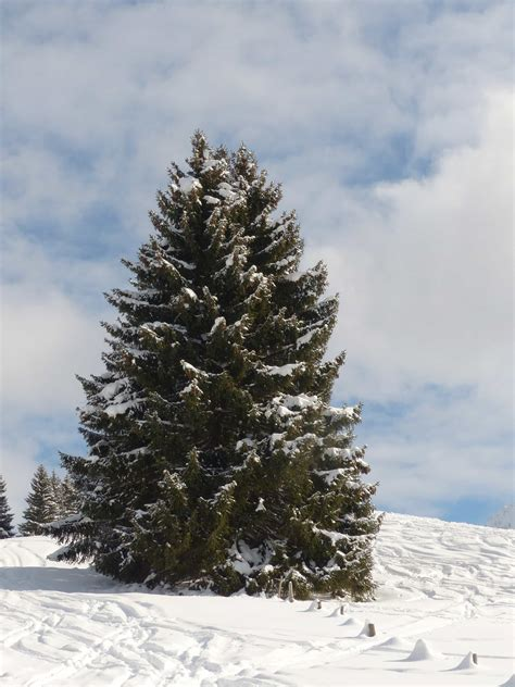 picture winter snow cold conifer hill blue sky