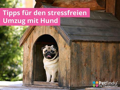 Tipps Für Umzug by Tipps F 252 R Den Stressfreien Umzug Mit Hund Petfindu