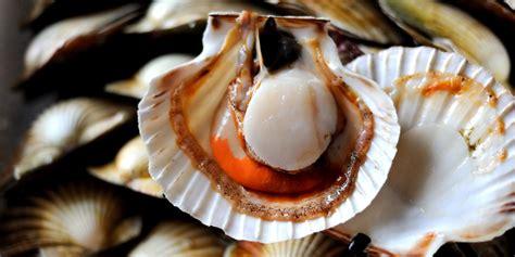 cuisine creme scallop recipes carpaccio scallop pops great chefs
