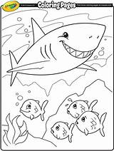 Coloring Shark Pages Crayola Sharks Colouring Sheet Fish Print Week sketch template