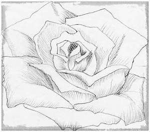 Como Dibujar Flores A Lapiz para Regalar Dibujos de Amor a Lapiz
