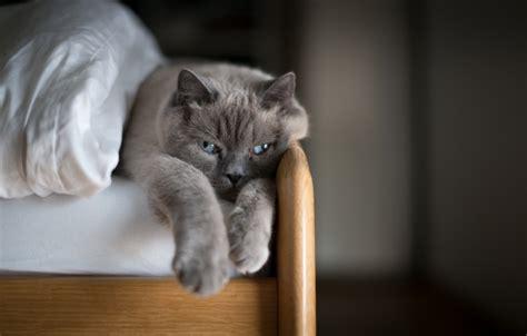 Wallpaper Cat, Comfort, House, Bed Images For Desktop
