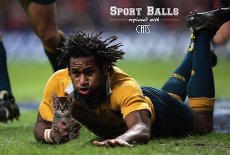 lol sports balls replaced  cats designtaxicom