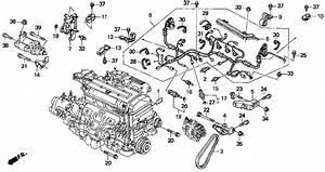 2001 Honda Accord Coupe Engine Diagram  2001  Free Engine Image For User Manual Download