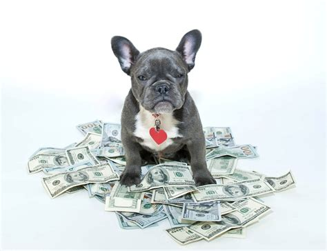 cost  owning  dog averages  expensive breeds