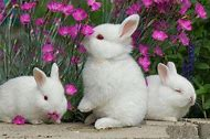 Cute Bunnies with Flowers