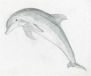 25+ best ideas about Easy Animal Drawings on Pinterest ...