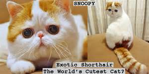 world s cutest cat cutest cat breeds in the world cats types