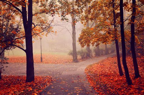 autumn, Park, Road, Trees, Fog, Landscape Wallpapers HD ...