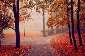 Autumn, Park, Road, Trees, Fog, Landscape, Wallpapers, Hd
