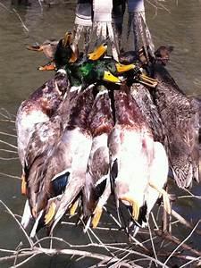 Guided Duck Hunts In Arkansas