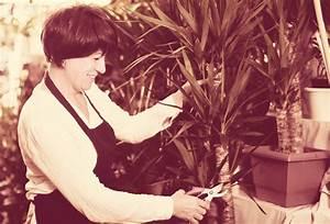 Yucca Palme Braune Blätter : yucca palme wann und wie sollten sie bl tter abschneiden ~ Lizthompson.info Haus und Dekorationen