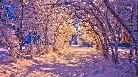 Weihnachtsbaum Weiß Geschmückt by Die 55 Besten Winter Und Weihnachten Hintergrundbilder