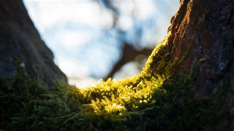 Britzer Garten Neujahr by Langsam Fr 252 Hling Kwnetzwelt