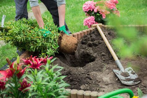 basic gardening tips for beginners fantastic gardeners