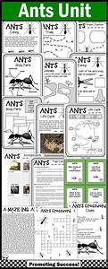 Ants Life Cycle No Prep Science Worksheets For Spring Or