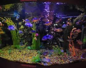 Bilder hintergrundbilder herunterladen kostenlos bild  aquarium