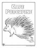 Porcupine Coloring Cape Worksheet Daughters Mufaro Porcupines Coloringbay Activities sketch template