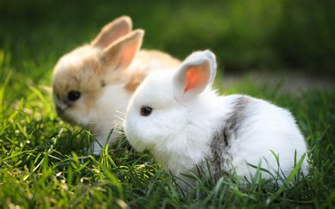 bunnies cute wallpaper beautiful animals  wallpaper