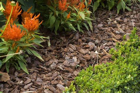 what is lanscaping mulch what it means how it s used in landscaping