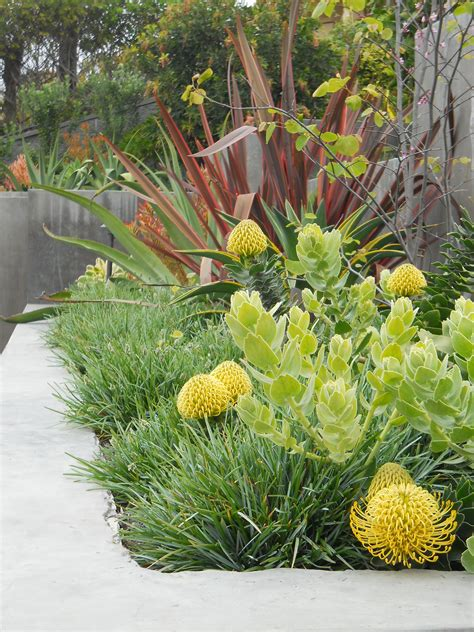 ca friendly design ideas australian garden garden