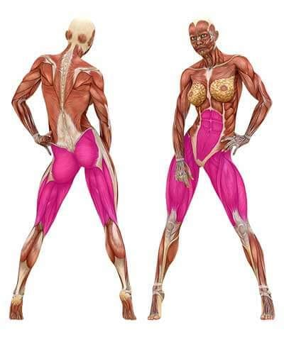 Here you can explore hq leg muscle transparent illustrations, icons and clipart with filter setting like size, type, color etc. hip thrusts