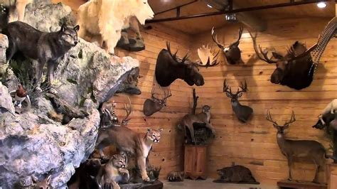 bb taxidermy foyt trophy room youtube