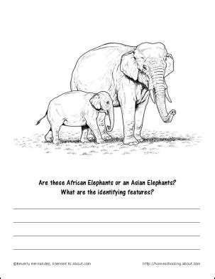 facts and printables about elephants and elephant