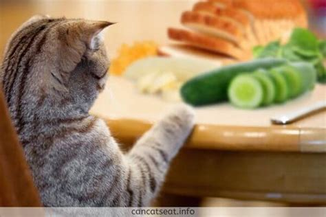 cats cucumbers why