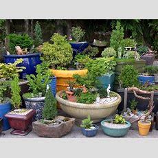 Container Garden  The Mini Garden Guru From