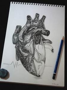 Human heart by tubyx on DeviantArt