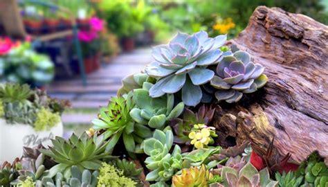 Sukkulenten Garten Anlegen by Steingarten Anlegen Anleitung Und Tipps F 252 R Richtige