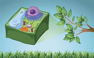 Unique And Imaginative Tips On How To Make A 3d Plant Cell