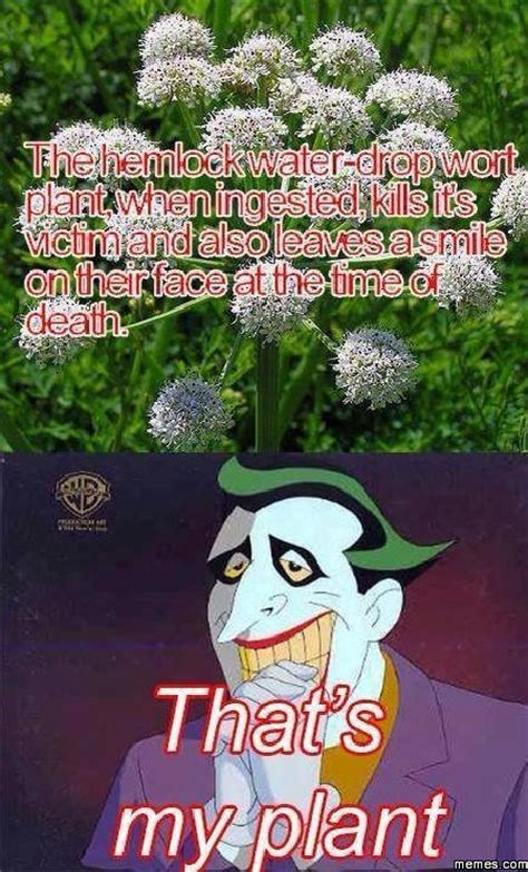 Plant Memes - home memes com