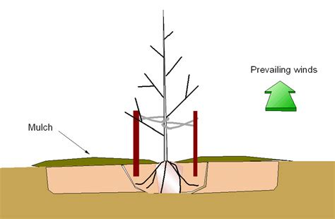 why you should avoid staking trees root simple