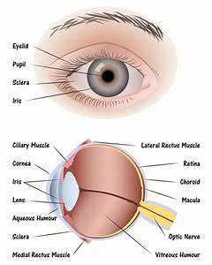 Cienciasmedicasnews  Anatomy Of The Human Eye