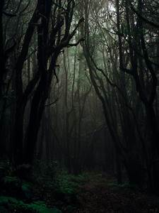 1000, Beautiful, Dark, Forest, Photos, U00b7, Pexels, U00b7, Free, Stock, Photos