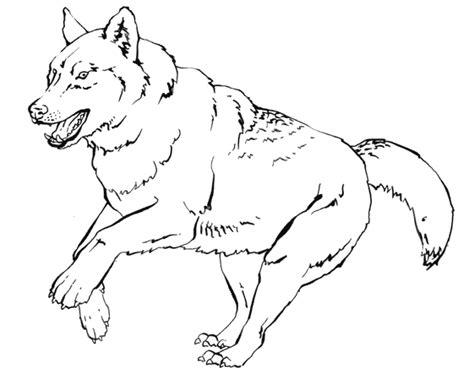 dessin de loup assis dessin chien loup