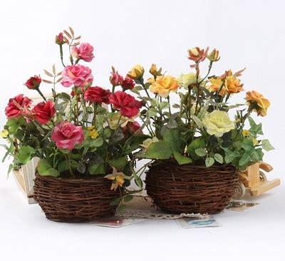 menanam bunga mawar pot teknik stek