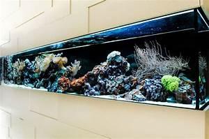 Aquarium Als Raumteiler : die besten 17 ideen zu aquarium raumteiler auf pinterest ~ Michelbontemps.com Haus und Dekorationen