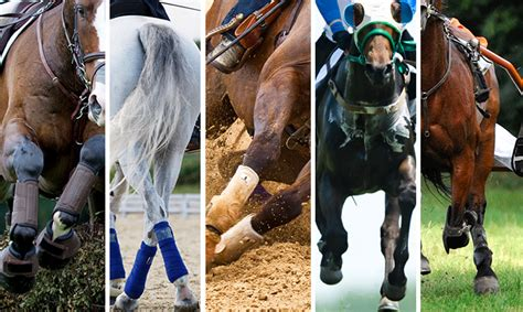 equine exercise physiology open learning